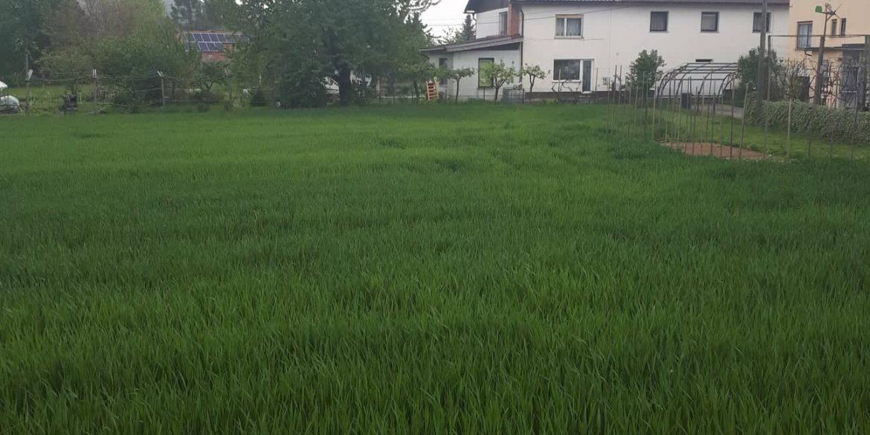 stavbno zemljišče brezje slika 1
